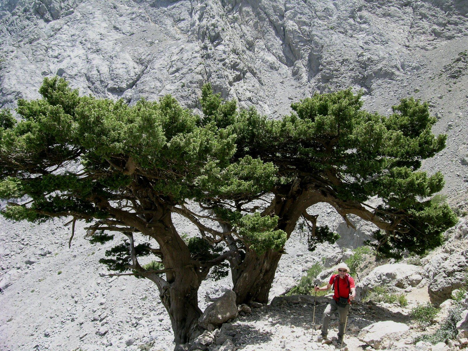 Creta 1 2007 085