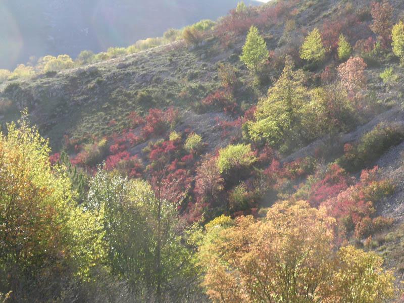 Sirente-Velino-nov.2006-186